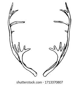 Isolated vector illustration. Pair of elk horns. Deer antlers. Symmetrical animal frame. Hand drawn linear doodle sketch. Black silhouette on white background.