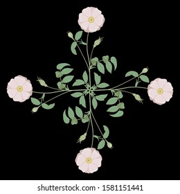 Isolated vector illustration. Square floral decor. Cross made of four branches of wild rose. Vintage style.
