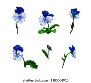 Isolated vector set of colorful pansy flowers.Hand drawn viola tricolor flowers from different point of view.