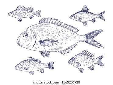 Ruff Fish Images, Stock Photos & Vectors | Shutterstock