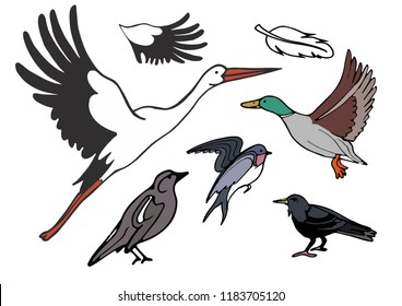 Isolated vector set with migratory birds on white background. Stork, crow, rook, swallow, nightingale. Birds. The end of the summer. The flight of birds to the southern edge.