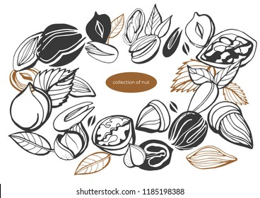 Isolated vector set of nuts on white background. Peanuts, cashews, walnuts, hazelnuts, almonds.Nuts and seeds collection. Vector hand drawn objects. Set of vector various nuts invintage style.