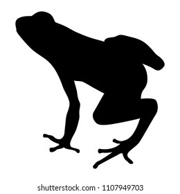 Isolated vector silhouette of a tropical frog.