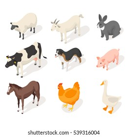 Isometric 3d vector set of farm animals. Front view. Icon for web. Isolated on white background.