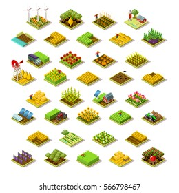Isometric barley farm house building staff farming agriculture wheat field scene. 3D isometric game city map icon set. Game tile tractor apple plant vegetable harvest farmland vector illustration