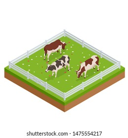 Isometric brown and white cows in a grassy field on a bright and sunny day. Dairy cattle set. Cows collection.