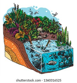 isometric ecosystem natural garden and pond with soil layer for education line art illustration cartoon colored hand drawn