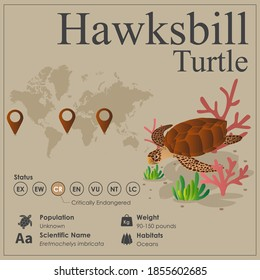 Isometric Hawksbill Turtle vector Infographic