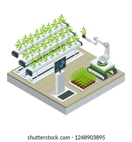 Isometric modern smart industrial greenhouse. Artificial intelligence robots in agricultural. Organic food, agriculture and hydroponic conccept.