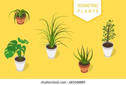 Isometric plant in modern pot small set. Fresh green herbs.