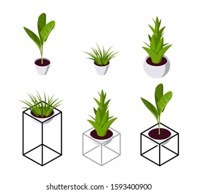 Isometric plant in scandinavian interior. Set of potted flowers icons in flat style for hygge designs. Vector illustration isolated on a white background.