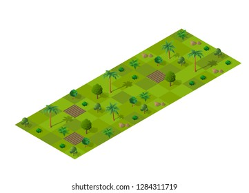 Isometric summery forest with trees, fir and bushes. Summer time of the year. Conceptual vector illustration.