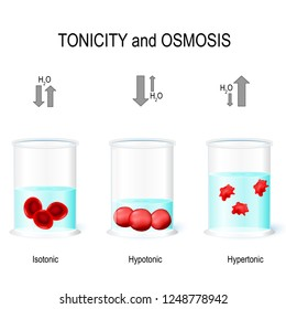 Isotonic, Hypotonic and Hypertonic solutions effects on animal cells. Tonicity and osmosis. This diagram shows the effects of hypertonic, hypotonic and istonic solutions to red blood cells. Vector