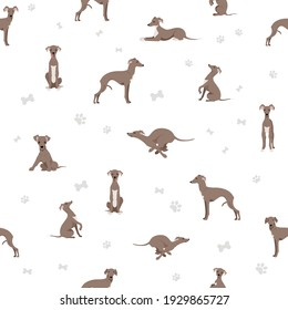 Italian greyhound seamless pattern. Different poses, coat colors set.  Vector illustration