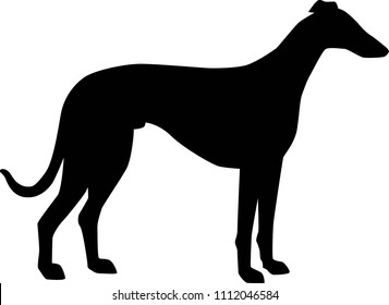 Italian Greyhound silhouette real in black