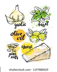 Italian ingredients for pesto. Vector illustration