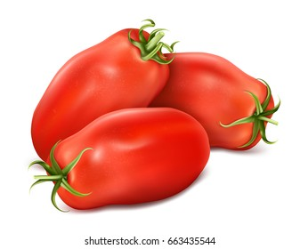 Italian plum tomatoes San Marzano. Vector illustration of tomato with green stem.