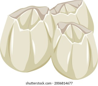 Ivoly Barnacles in cartoon style on white background illustration