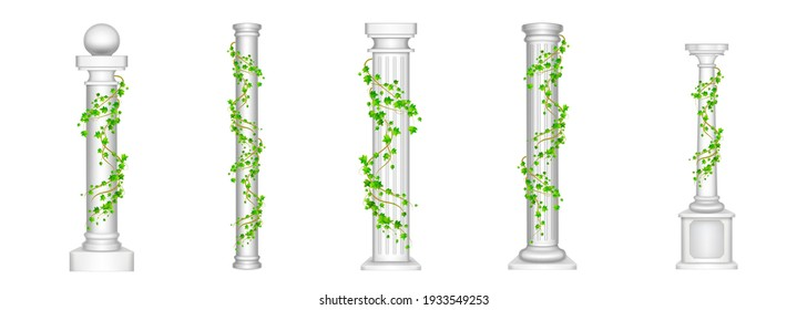 Ivy columns, antique pillars with green climbing liana plant leaves isolated on white background. Ancient classic stone roman or greek architecture for interior facade design, Realistic 3d vector set