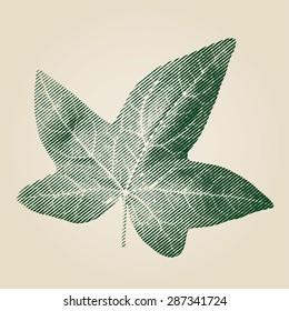 Ivy leaf vector illustration.