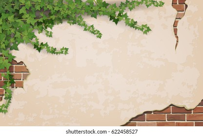 Ivy on weathered wall background with brick masonry.  Vector realistic illustration.