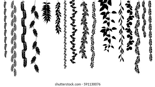 Ivy vector back and white on white background. Nature,organic items. Easy edit. Vector illustration