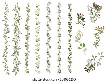 Ivy vector on white background. Nature,organic items. Easy edit. Vector illustration