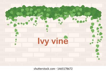 Ivy vine and brick wall. flat design style minimal vector illustration.
