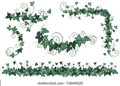 Ivy vines. Set of realistic vector illustrations of ivy vines isolated on white background for floral decorative design.
