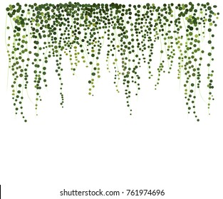 ivy wall background. greenery vector illustration. climbing plant leaves. texture background card website banner leaflet web flyer blog stationery