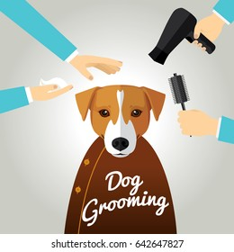 Jack Russell  getting groomed at pet grooming salon.
