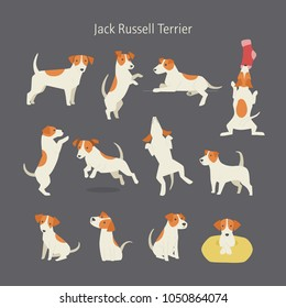 Jack russell terrier dog breed pose set. vector illustration flat design