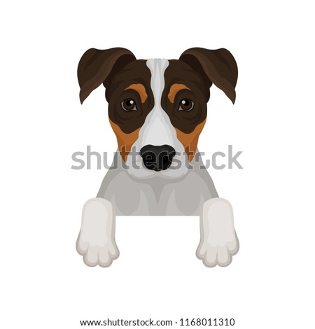 Jack russell terrier hanging