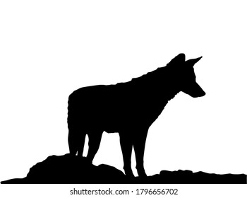 Jackal vector silhouette isolated on white background. Coyote observe pray silhouette.