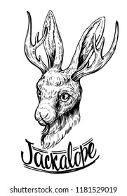 Jackalope. Hare with horns. Hand drawn illustration converted to vector
