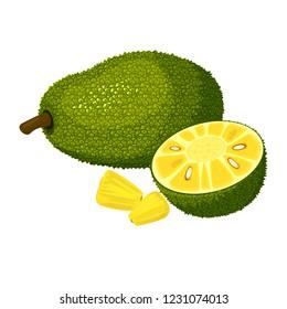 Jackfruit isolated on white background. Bright vector illustration of colorful half and whole of juicy jackfruit. Fresh cartoon
