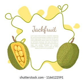 Jackfruit poster with frame and place for text. Exotic juicy stone fruit vector isolated. Jack tree, fenne, jakfruit or jak. Fig, mulberry, and breadfruit