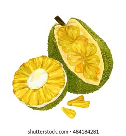 Jackfruit, vector Illustration. Exotic fruit