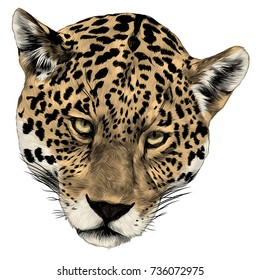 Jaguar Head Sketch Vector Graphics Color Picture
