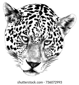 Jaguar head sketch vector graphics monochrome black-and-white drawing