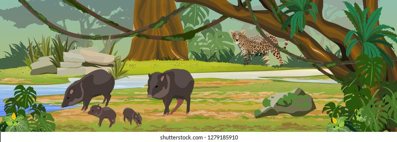 The jaguar hunts for the Peccari family. the jungle A tropical forest. Rainforests of Amazonia. Tree, epiphytes, creepers, banana trees and monsteras. Realistic Vector Landscape