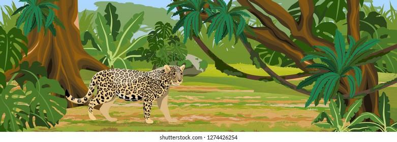 Jaguar in the jungle. Big cat on the hunt. Amazonia rain forests. Realistic Vector Landscape