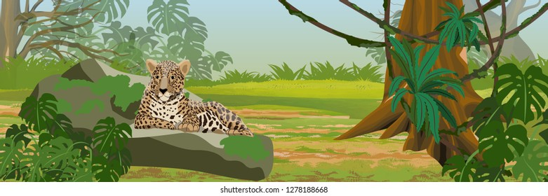 The jaguar lies on a stone. Jungle. Big cat on the hunt. Amazonia rain forests. Realistic Vector Landscape