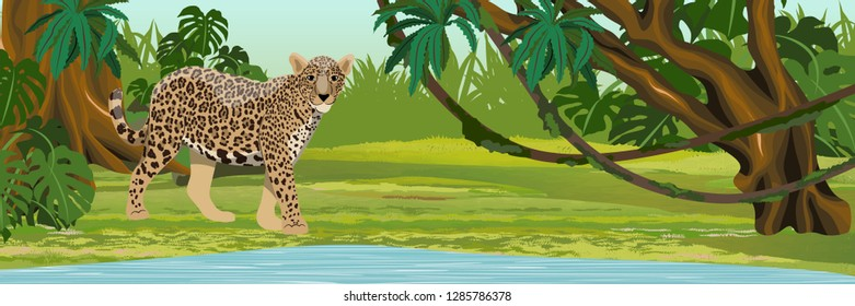 Jaguar near the lake. Jaguar in the jungle. Big cat on the hunt. Amazonia rain forests. Realistic Vector Landscape