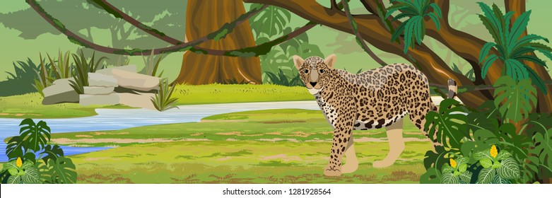Jaguar near the river. Jaguar in the jungle. Big cat on the hunt. Amazonia rain forests. Realistic Vector Landscape