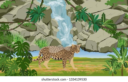 Jaguar near the tropical waterfall and large lake. Jaguar in the jungle. Big cat on the hunt. Amazonia rain forests. Realistic Vector Landscape