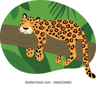 Jaguar from south america that lies on a tree among tropical trees