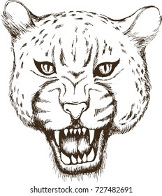Jaguar. Vector illustration