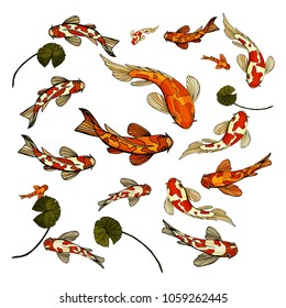 Japan Carp Koi Fishes on white background. Gold fishes and white with red spots Fishes and green leafs hand drawn vector illustration.