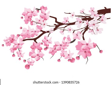 Japan sakura cherry branch with blooming flowers vector